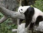 Update Google Panda 4.0