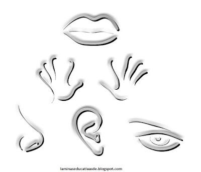 Nuestros 5 sentidos