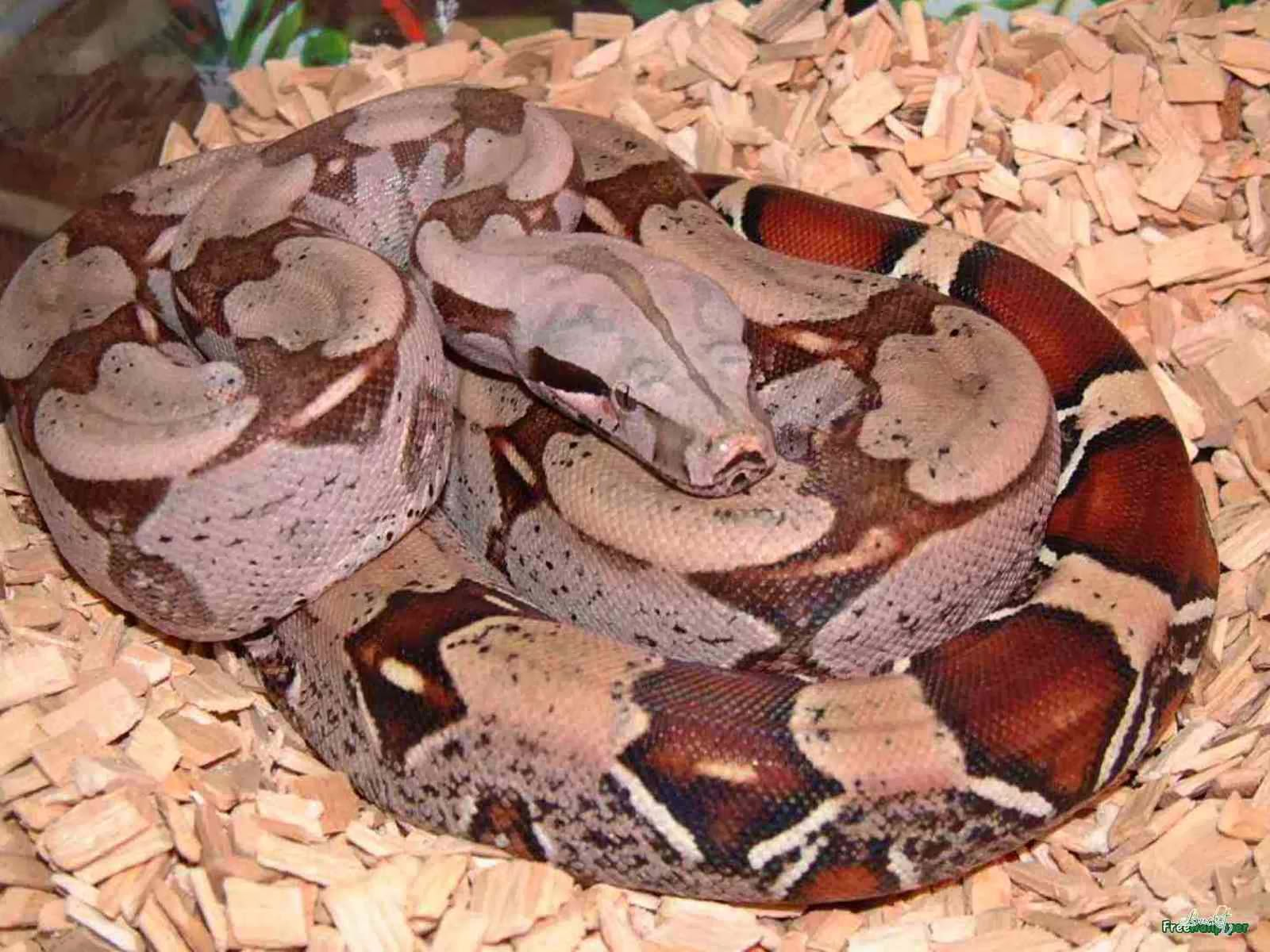 31 collections snakes 65 dogs free wallpapers collections 22