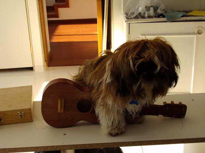 Tofi tocando la guitarra