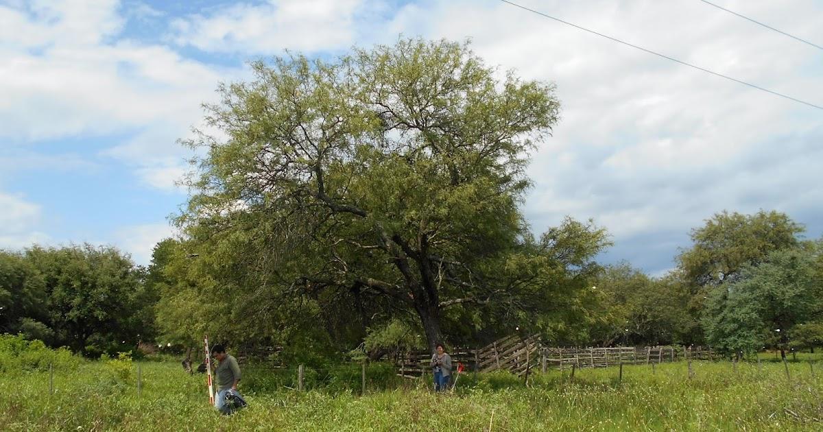 Parque chaque o forestal recolecci n de frutos de for Viveros zona norte