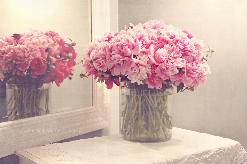 shabby chic photograph, pastel photograph, peonies