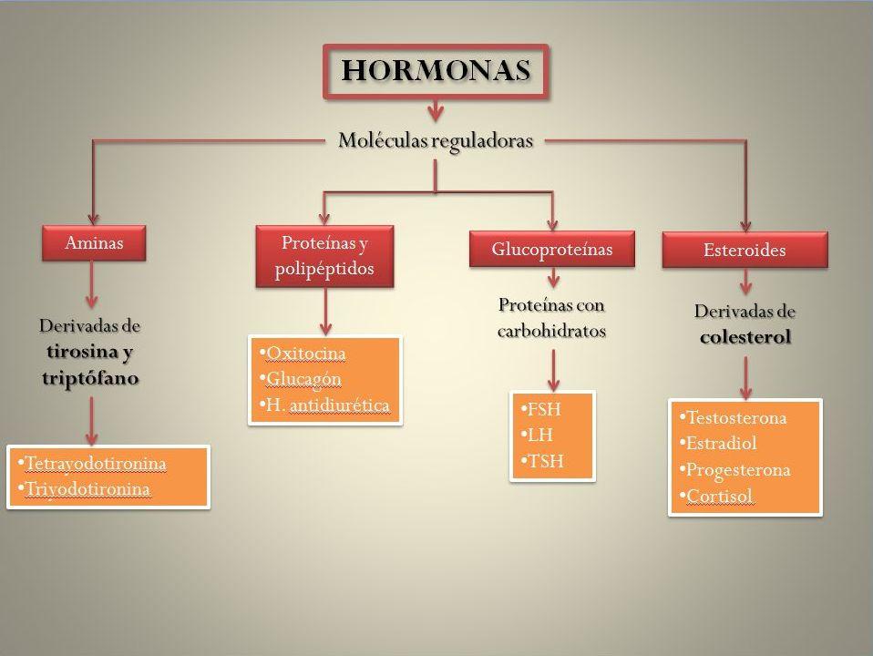 tipos de esteroides y sus efectos