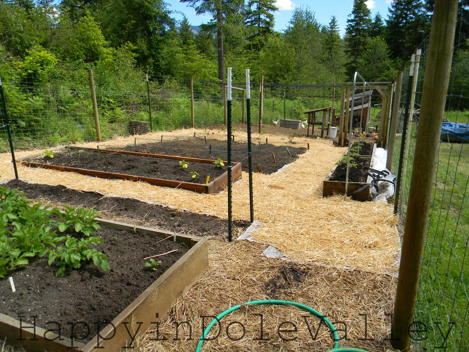 happy in dole valley blooms seedlings chickens and an easy weed barrier garden journal 9. Black Bedroom Furniture Sets. Home Design Ideas