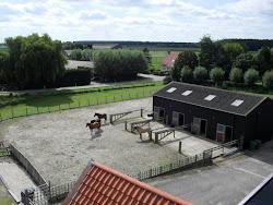 Buitenpaards.nl