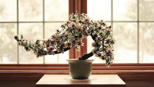 pohon bonsai yang sangat ajaib
