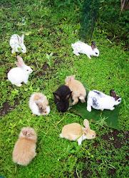 Anak-anak kelinci
