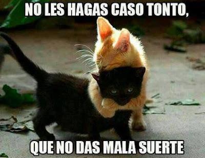 Gato negro humor
