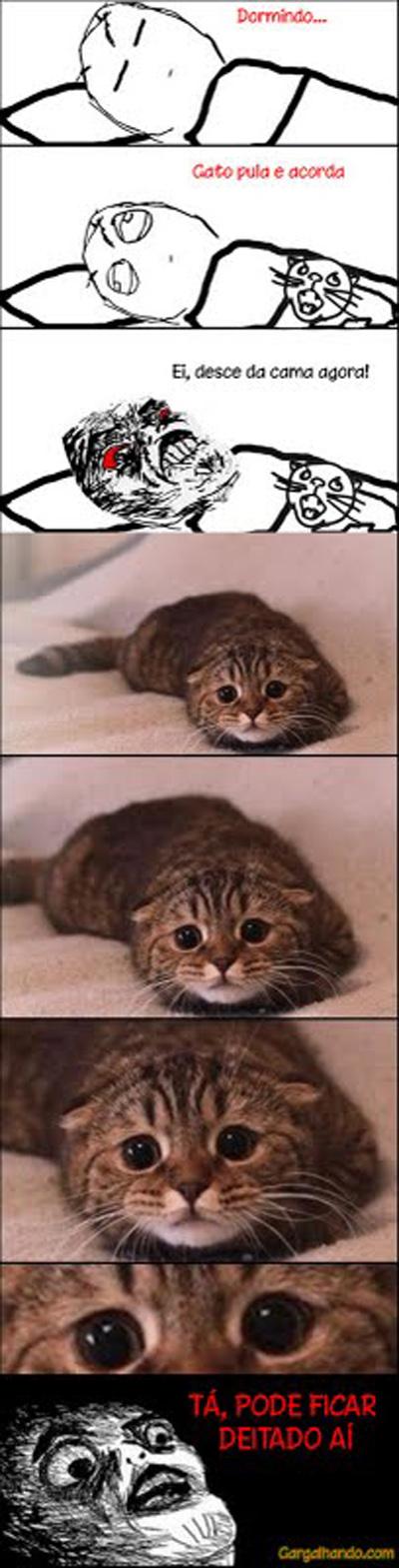 Eu gato desce da cama AGORA !!!