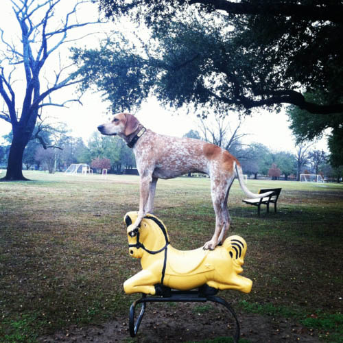 Madie on things - cão - cavalo - brinquedo