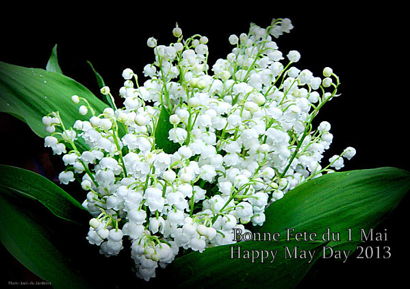 American mom in bordeaux la fete du muguet happy may day - Bouquet de muguet photo ...