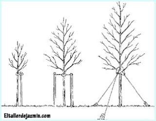 plantación de un árbol