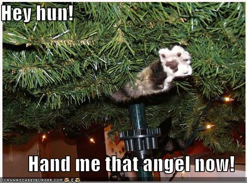 Funny Angel Cat Pictures Funny Animal