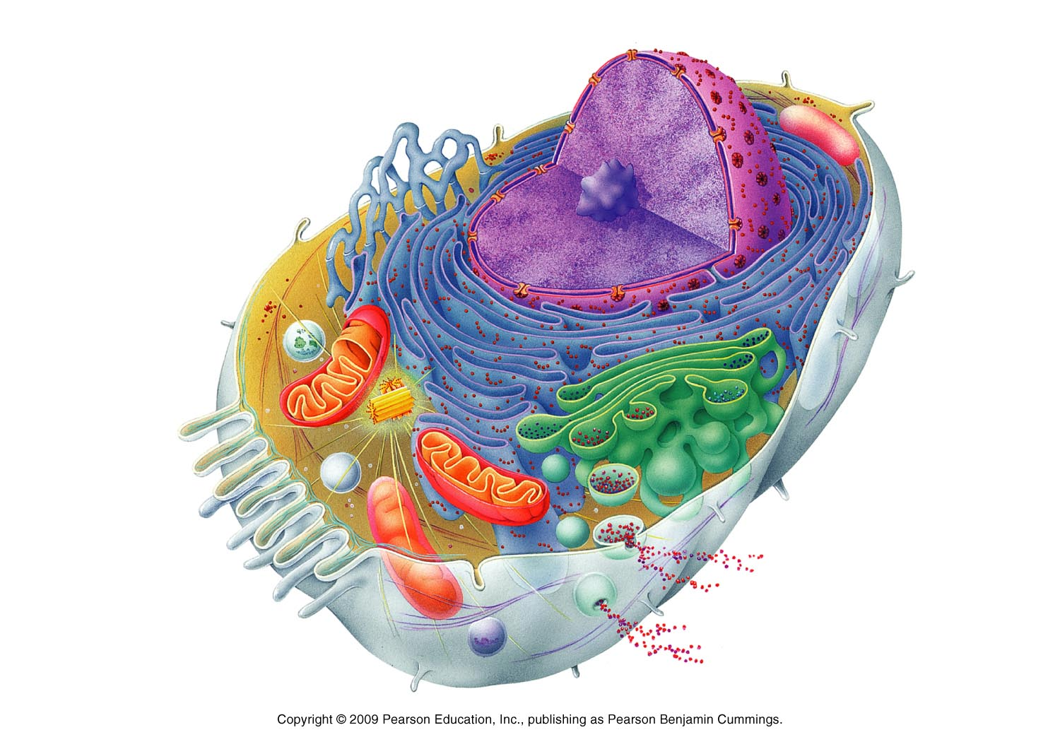 Subject matter cellular biology