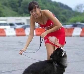 Anjing Gigit kain Awek
