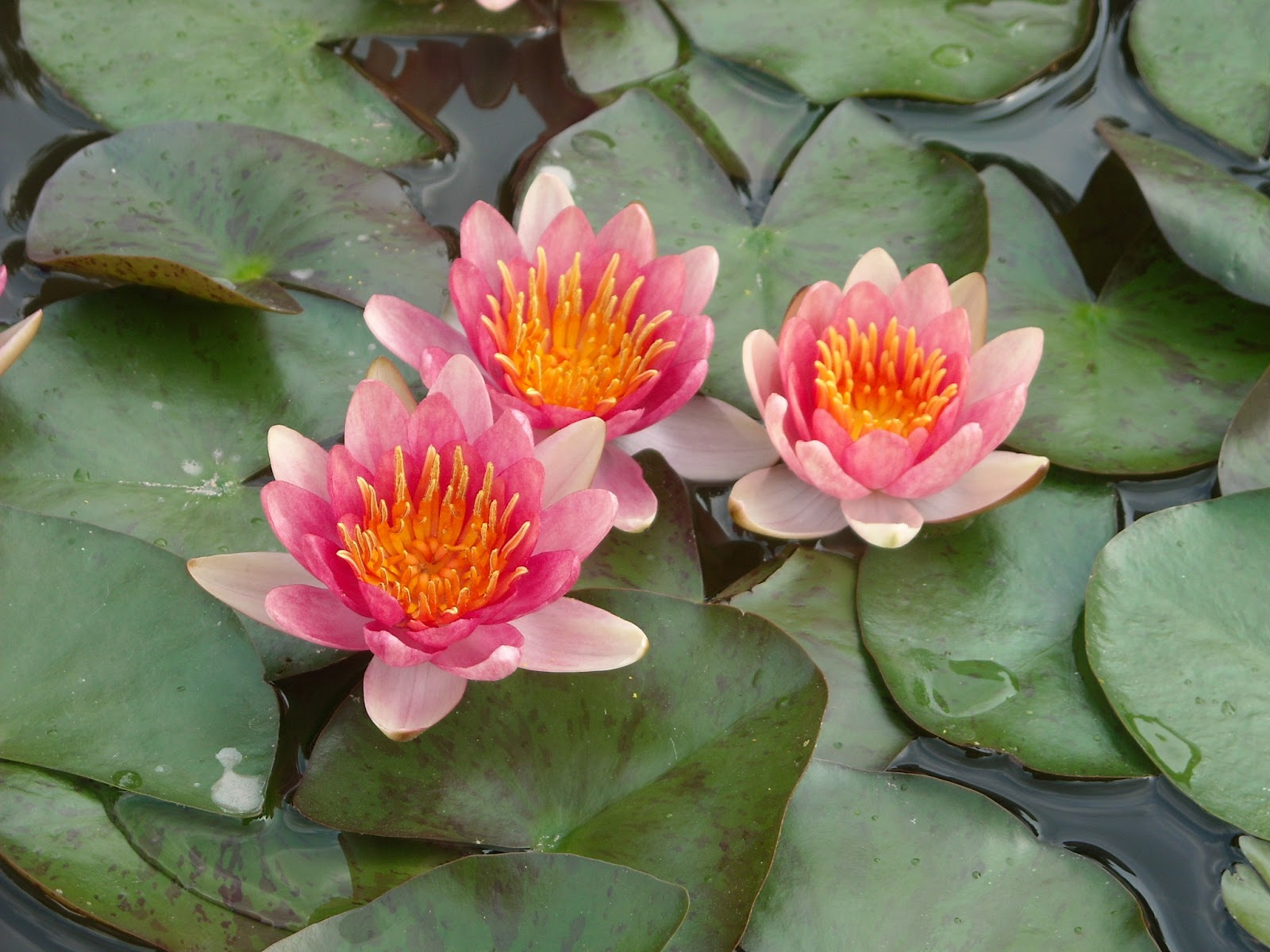 Las plantas imagenes de plantas for Plantas para estanques de peces