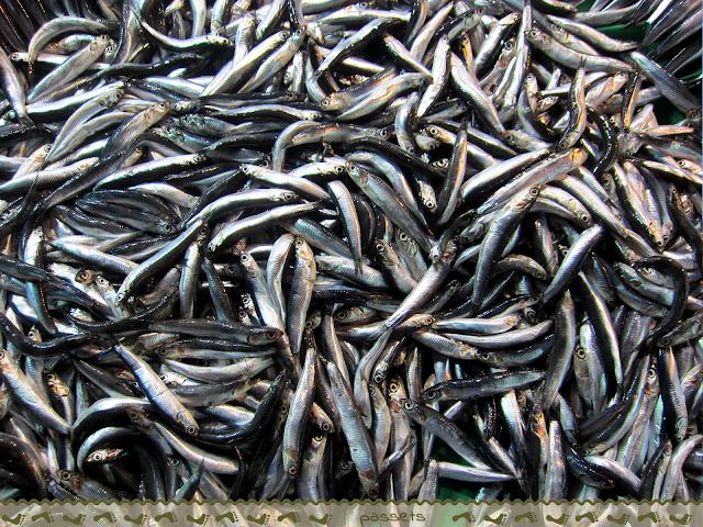 Mercado Pescado. Puente Gálata.