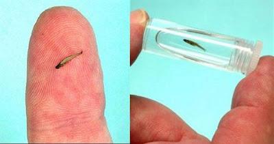 أصغر الحيوانات في العالم 11.jpg