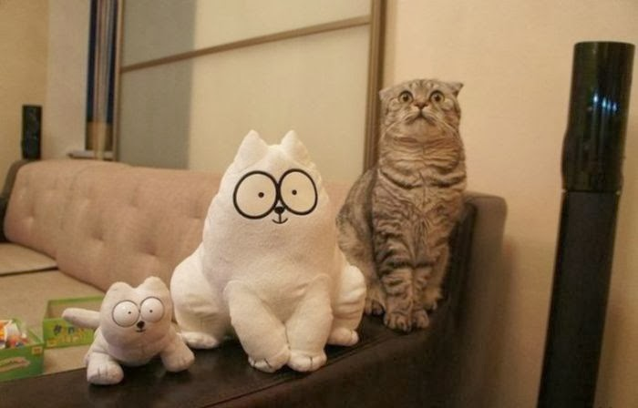 Funny cats - part 87 (40 pics + 10 gifs), cat sits next to Simon's Cat toys