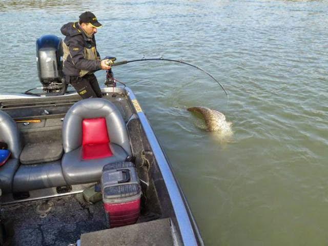 Este hombre atrapo un verdadero monstruo de rio.