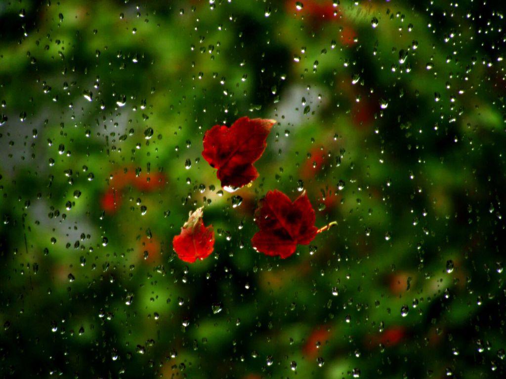 http://1.bp.blogspot.com/--2aAylPydoA/ULMSRjrpIQI/AAAAAAAAAEA/GeRw__bOhDg/s1600/rainy__Wallpaper_dcasm.jpg