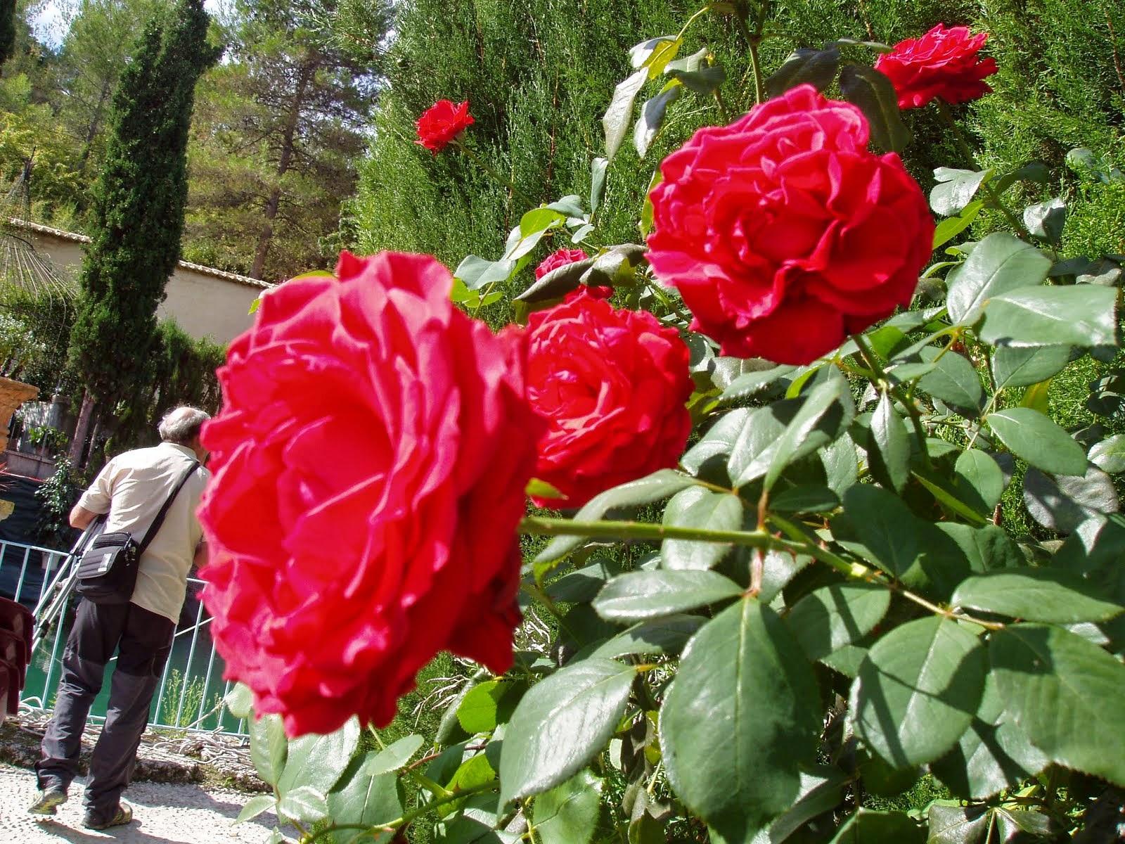 Jardin de Santos 3