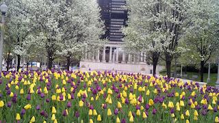 flowers, Millennium Park