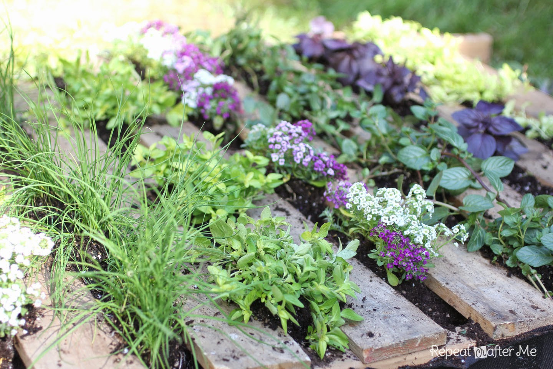 ogródek ziołwy inspiracje