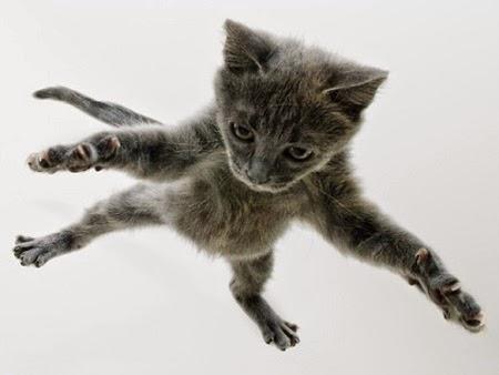 4 Fakta Kucing Dapat Bertahan Saat Jatuh Dari Ketinggian
