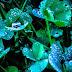 Những bông hoa đẹp và những giọt sương