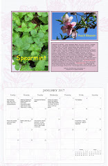 2017 Desert Gardening Wall Calendar