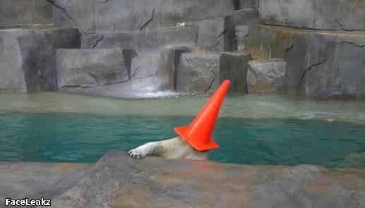 21 Foto Yang Harus Anda Lihat Setelah 21 Mei 2011 Berlalu - 6. Benda berbentuk kerucut menempel di atas kepala anjing laut ini