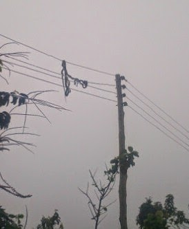 Nigeria: Snakes Found Entangled On Electric Wire in Benin