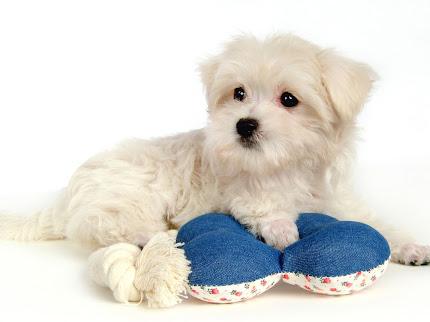 foto anjing peliharaan