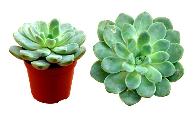 A cura plantas de interiores e seus efeitos terap uticos for Zamioculcas cura