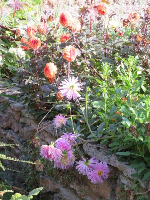 Admirer les jardins merveilleux
