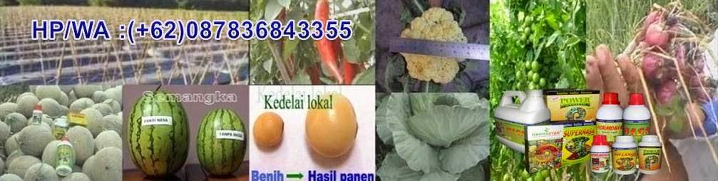 Meningkatkan panen agrokomplek