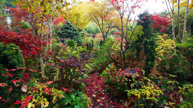Foliage colours of autumn in our woodland garden