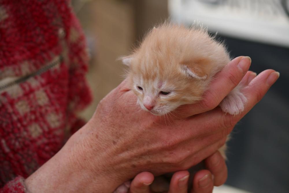 How Long Do Cats Nurse Their Kittens