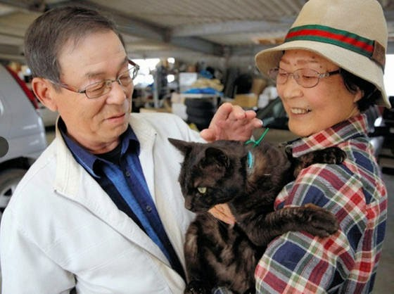 Missing Cat From Japan Tsunami Found ALIVE After 3 Years