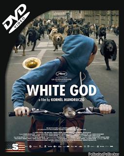 Dios Blanco [DVDRip][Subtitulada][MG-1F-UL-TB-UC]