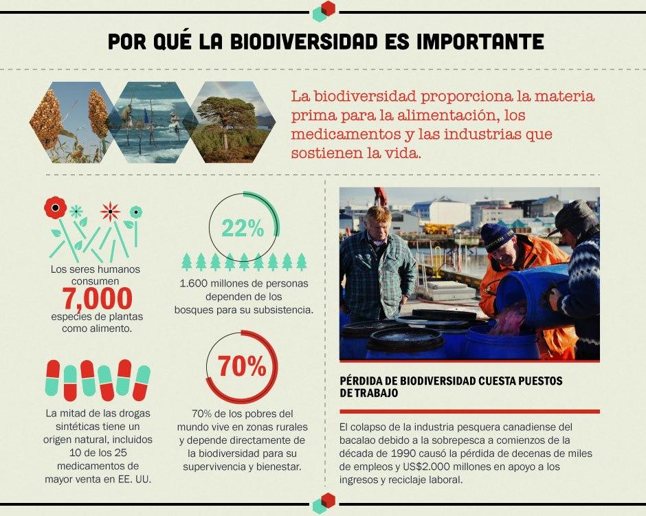 Cual es la importancia de la biodiversidad en mexico wikipedia for Importancia de la oficina wikipedia