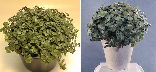 Quintal das flores by patricia plantas em casa qual a for Plantas para dentro de casa sombra