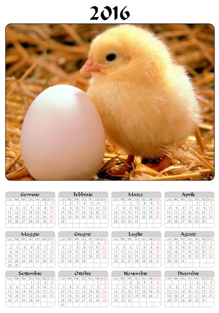 Calendario 2016 - pulcino