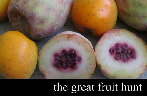 the great fruit hunt