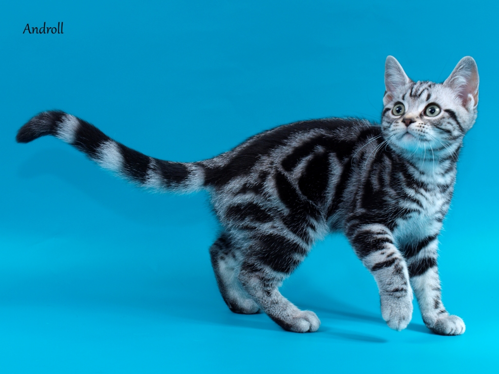 black and white spotted cat