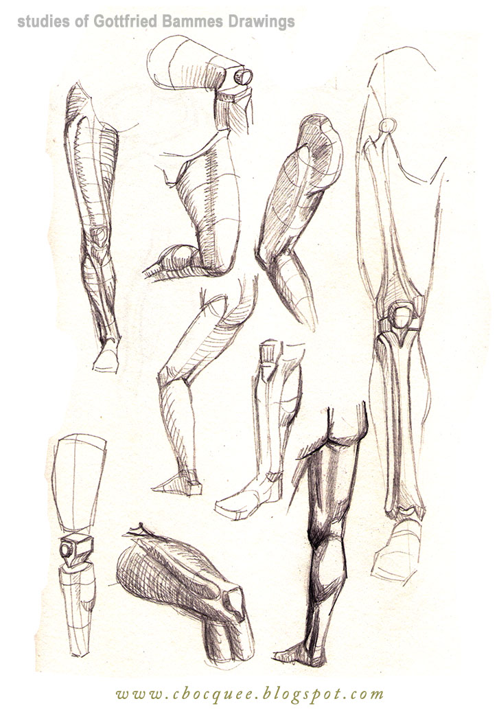 drawings of leg anatomy and structure