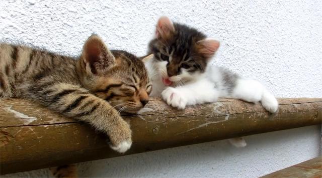 Gatinho não deixa amigo dormir de jeito nenhum