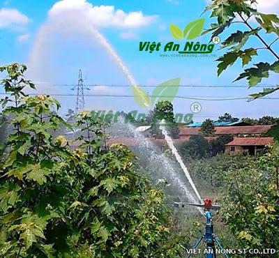 Súng tưới cây VAN49 Plus - 30PY Kim Long