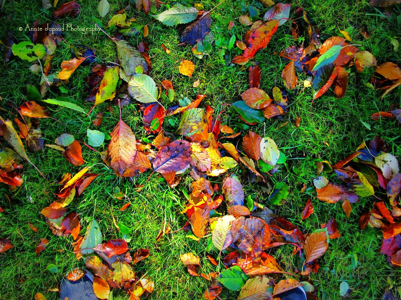 autumn, leaves on grass